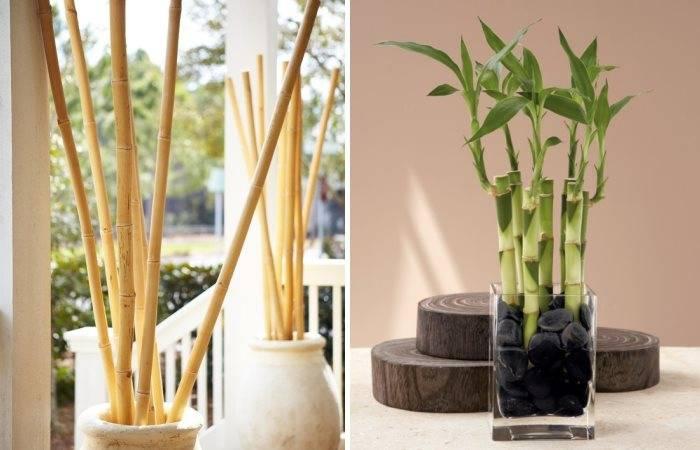 Бамбук в качестве декора