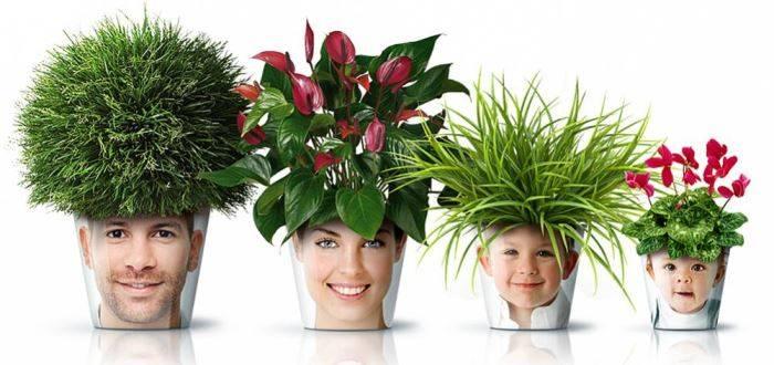 Украшение интерьера растениями