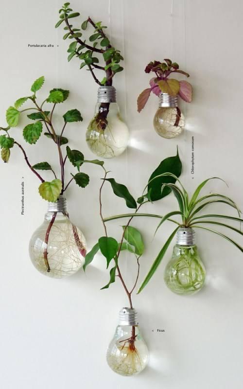 Как интересно поставить комнатные растения