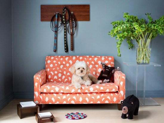 Диван для собаки в квартире