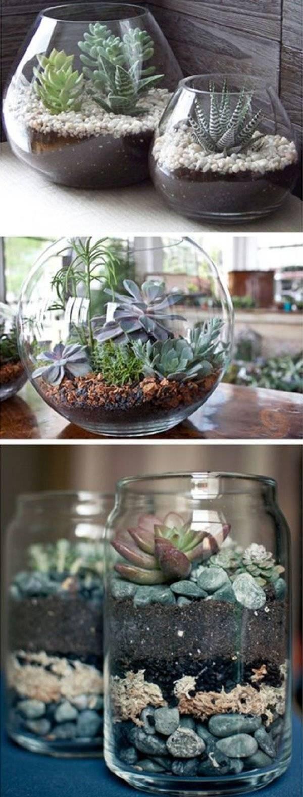 Комнатные растения в прозрачных горшках