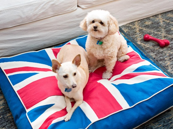 Подушка в роли места для собаки