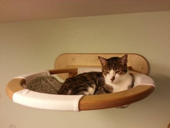 Подвесная полка в роли кровати для кошки