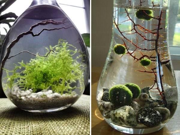 Комнатные растения - водоросли