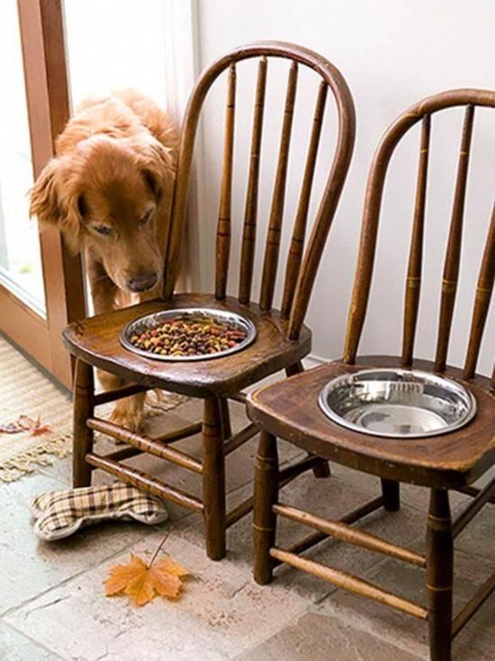 Старые стулья как мебель для животных