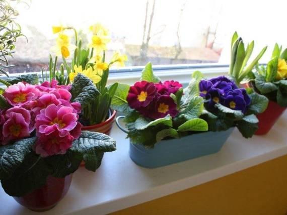 cvety-na-podokonnike