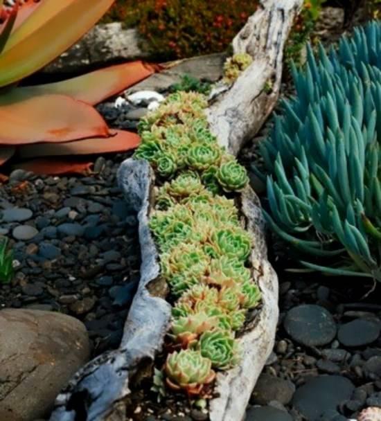 Идея для растений в саду