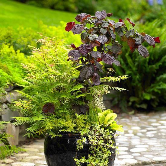 Украшение дворика растениями в вазах