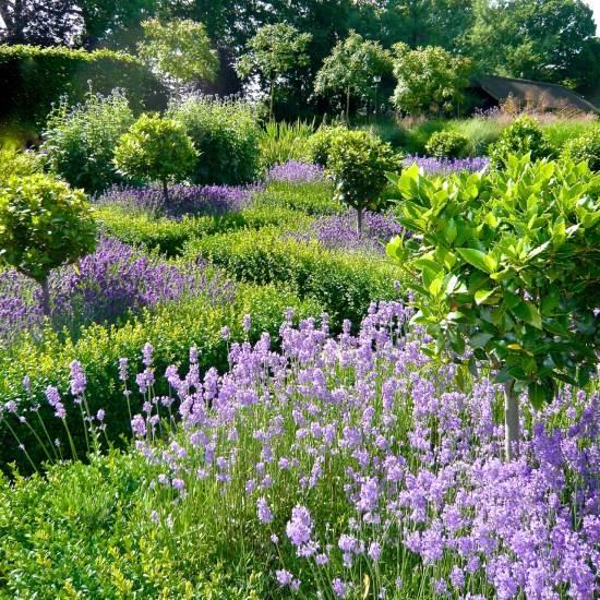 Сад с узкими дорожками и высокими цветами