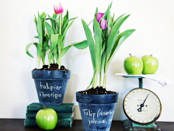 Необычные горшки для растений