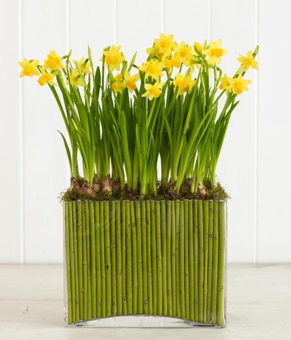 Нарциссы и стебли кизила