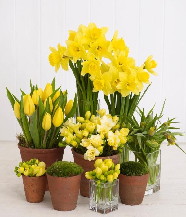 Разные желтые цветы в интерьере