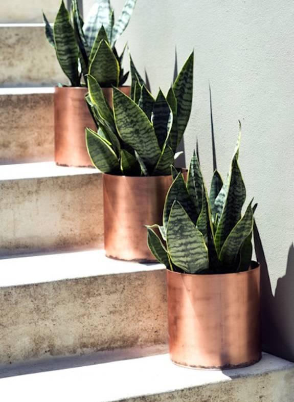 Украшение лестницы растениями