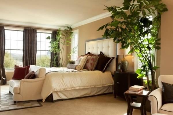 Высокие комнатные растения в спальне