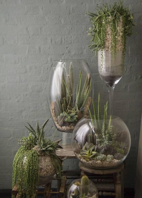 Растения в больших стеклянных вазах
