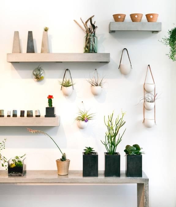 Полки с комнатными растениями