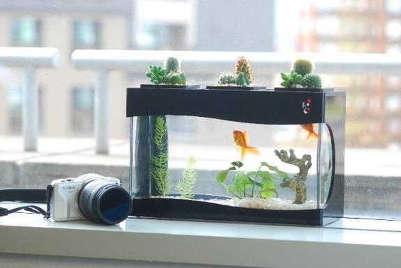 Кактусы на аквариуме