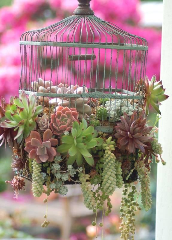 Птичья клетка с растениями