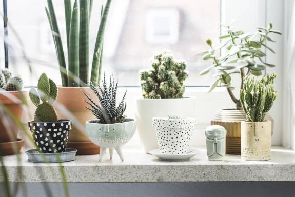 Растения суккуленты на подоконнике