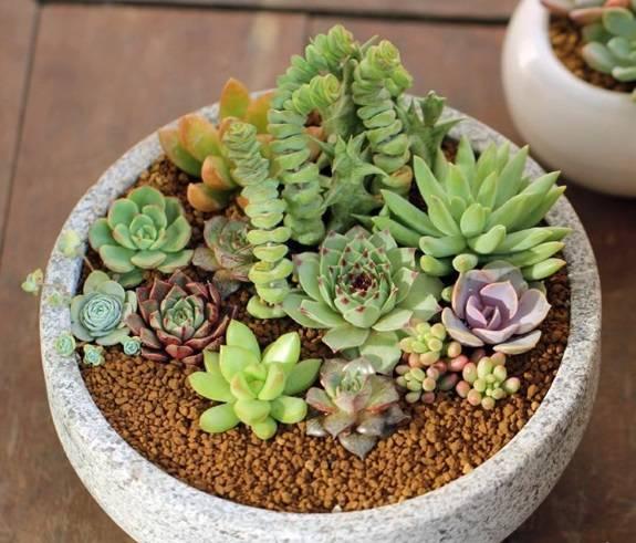 Большой горшок с многими растениями