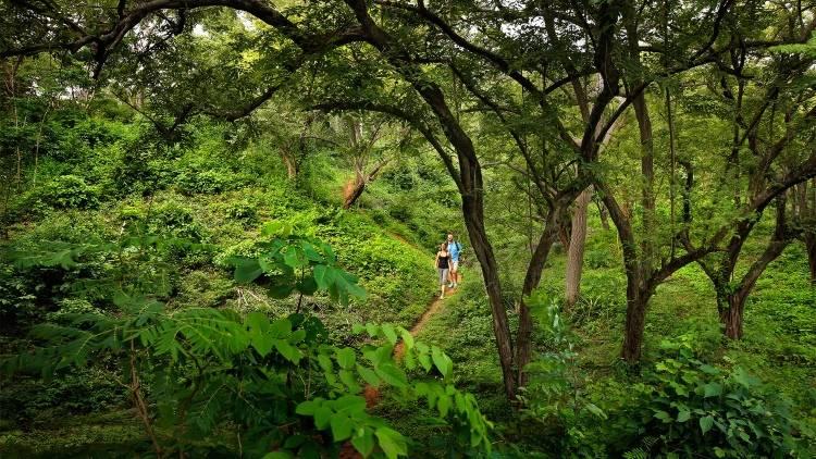 Экскурсии в джунгли Никарагуа
