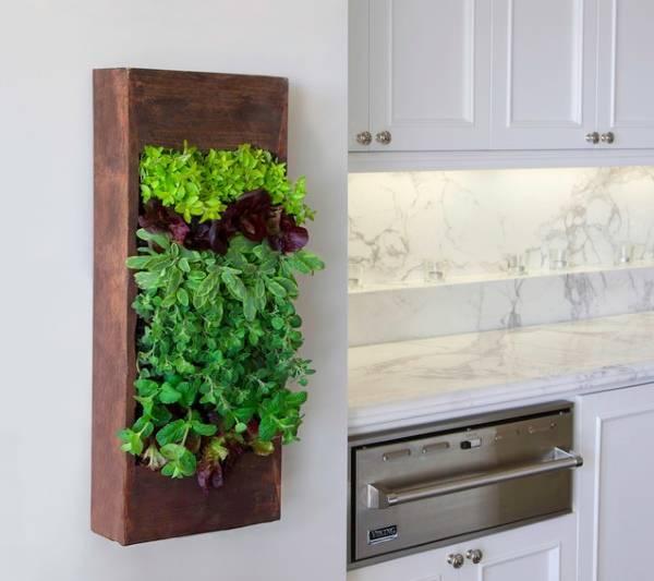 Фито стена в дизайне кухни