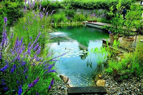 Красивые фото бассейнов - пруд для купания во дворе