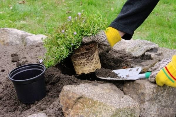 Когда и как сажать растения для альпийской горки