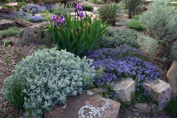 Растения и цветы для альпийской горки - фото на даче