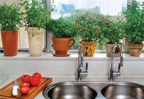 Рассада и травы на подоконнике в дизайне кухни
