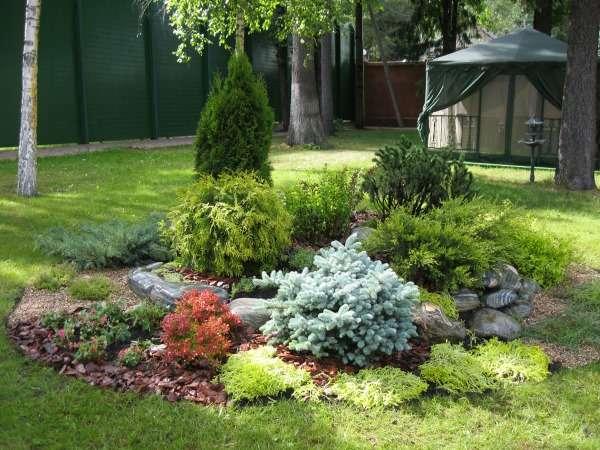 Ландшафтный дизайн двора своими руками - фото с хвойными растениями