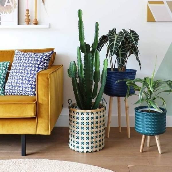 Комнатные растения в модном дизайне интерьера 2017