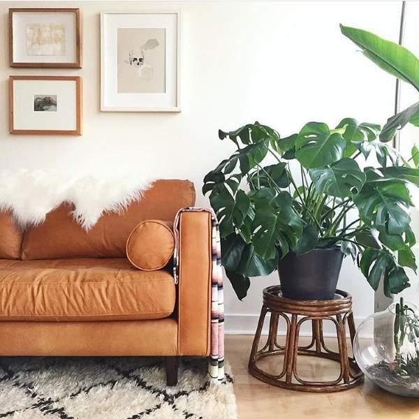 Новые тенденции в дизайне интерьера 2017 - комнатные растения