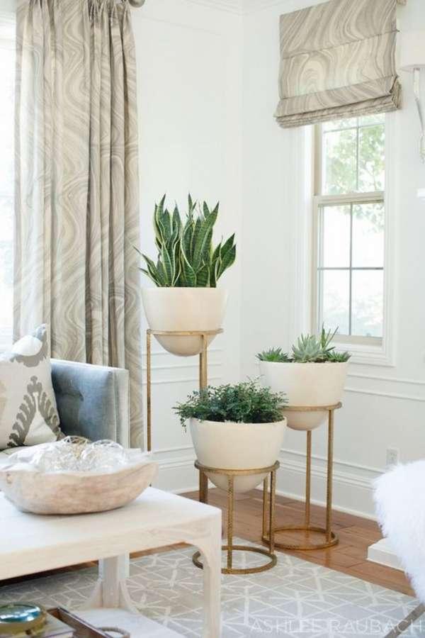 комнатные растения в интерьере гостиной, фото 24
