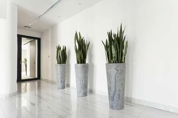 растения в интерьере, фото 57