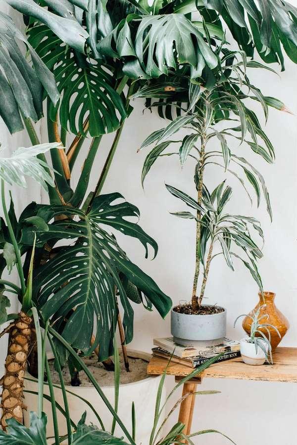 растения интерьера, фото 58