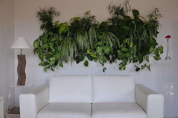 растения интерьера, фото 61