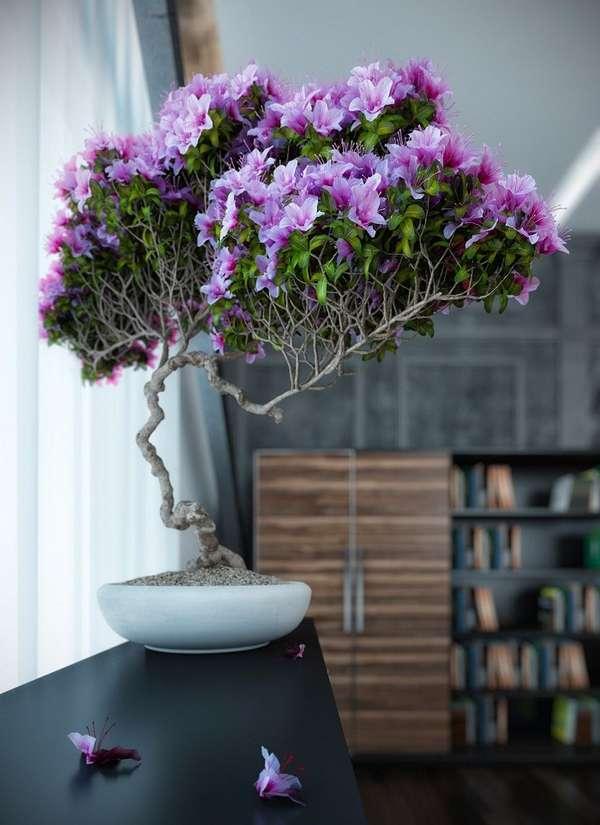 комнатные растения, фото 63