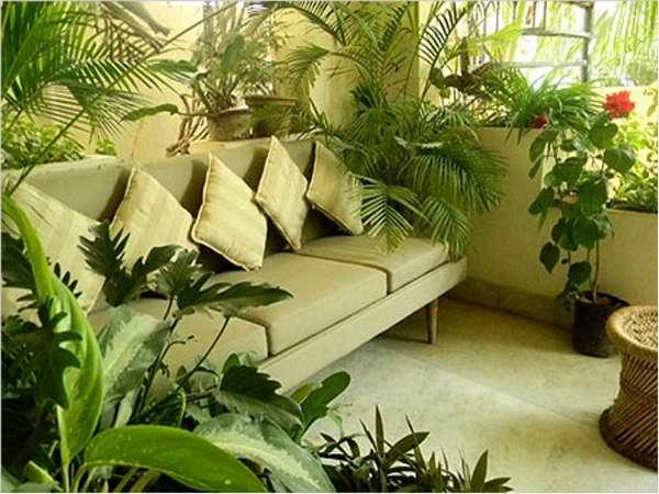 комнатные растения, фото 64