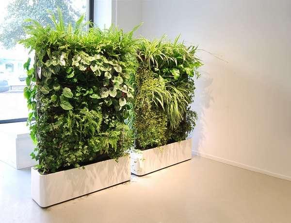 растения интерьера, фото 9