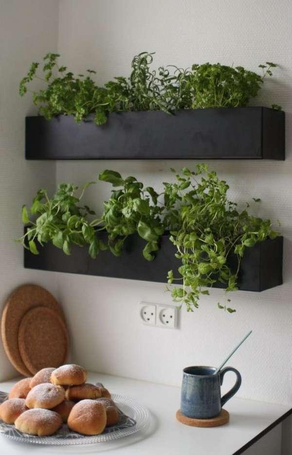 растения в интерьере кухни, фото 32