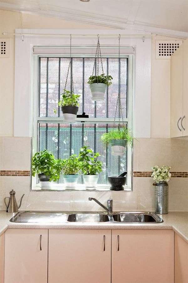 растения в интерьере кухни, фото 34