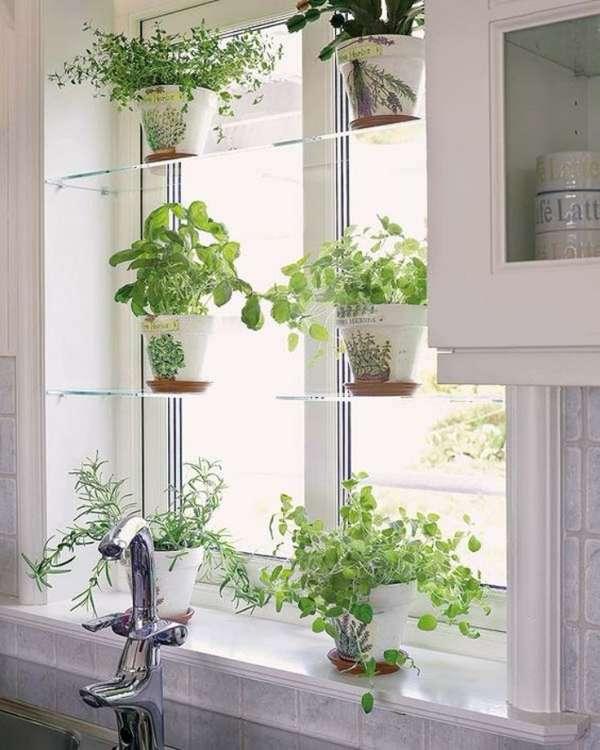 растения в интерьере кухни, фото 37