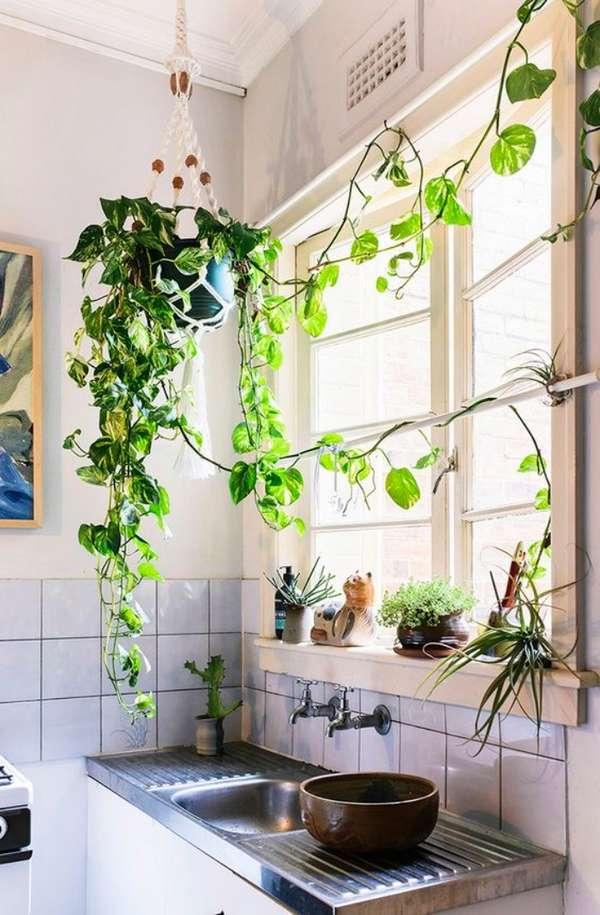 растения в интерьере кухни, фото 38