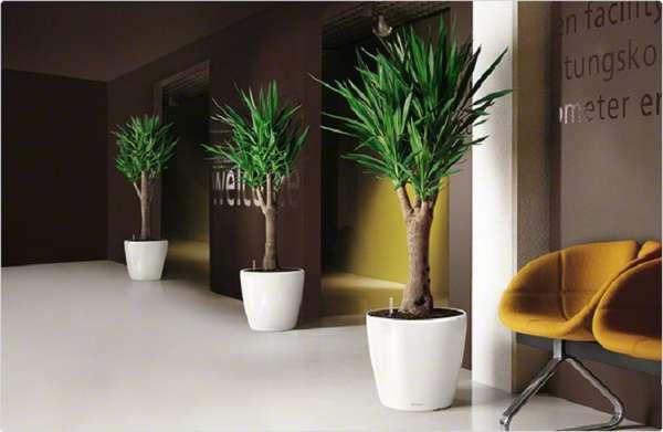 комнатные растения в интерьере квартиры, фото 2