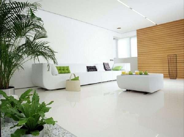 комнатные растения в интерьере квартиры, фото 4
