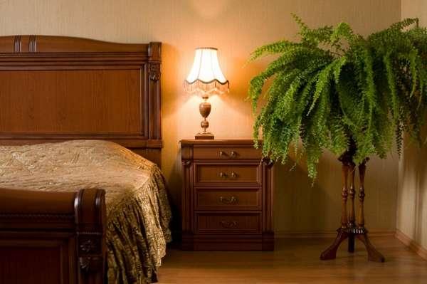 растения в интерьере спальни, фото 25