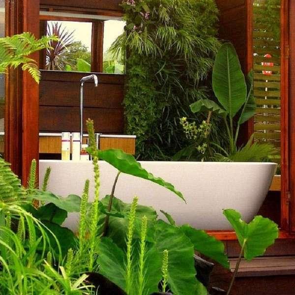 комнатные растения, фото 44