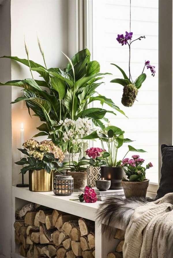 растения в интерьере особенности оформления, фото 53