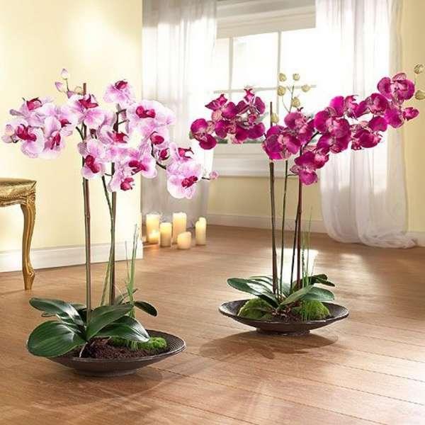 Растения в интерьере жилого дома 86 фото комнатные цветы в красивых вазах декор из искусственных растений